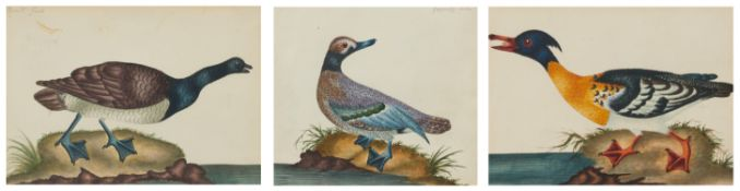 Englischer Meister. um 1900. Drei Aquarelle: Gänse und Enten. Jeweils: Aquarell auf Papier.