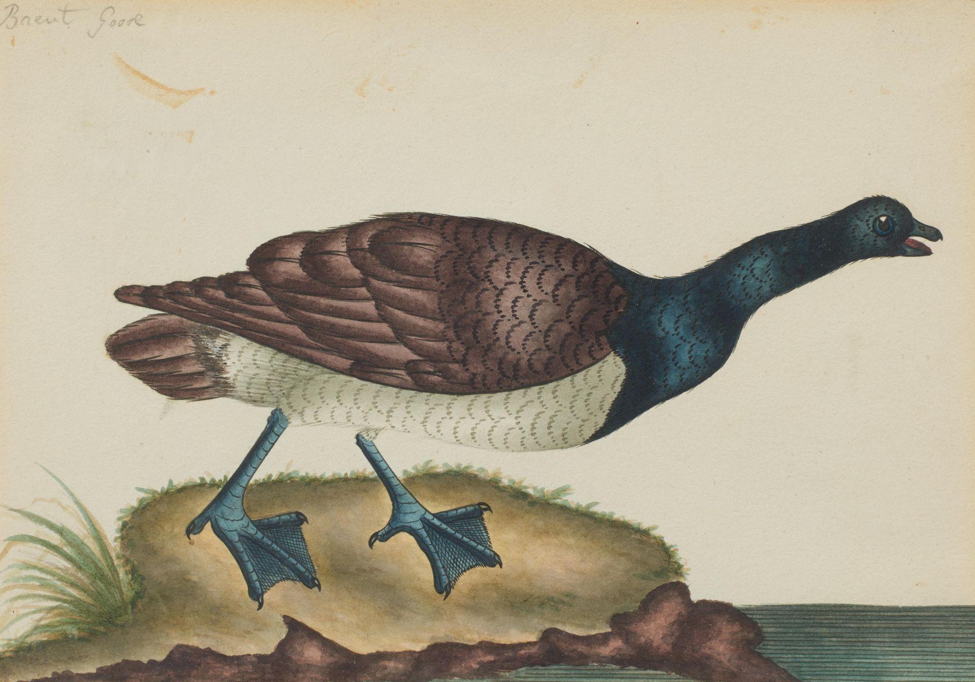 Englischer Meister. um 1900. Drei Aquarelle: Gänse und Enten. Jeweils: Aquarell auf Papier. - Bild 2 aus 11