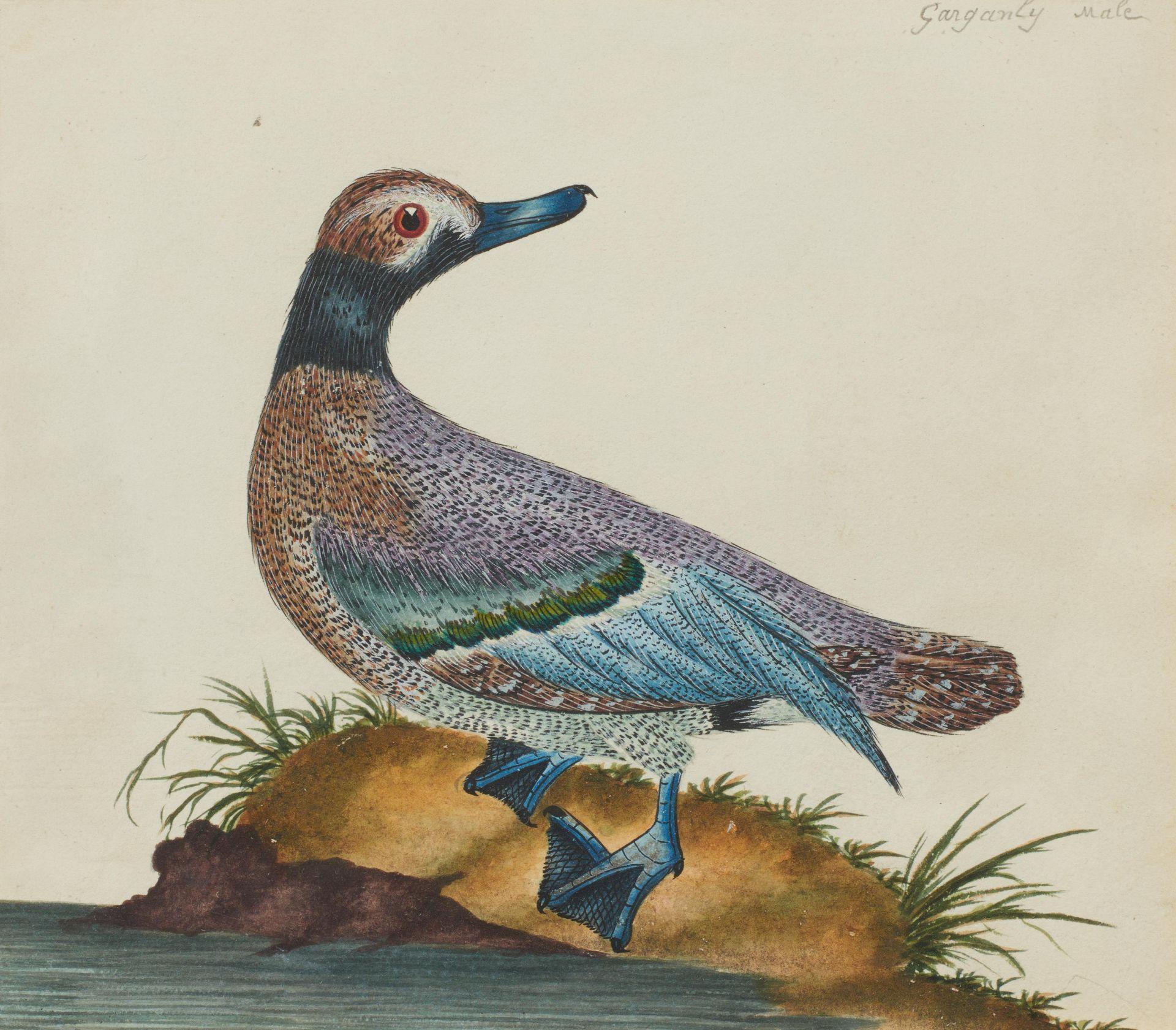 Englischer Meister. um 1900. Drei Aquarelle: Gänse und Enten. Jeweils: Aquarell auf Papier. - Bild 5 aus 11