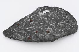 Fossile Orthoceras Platte
