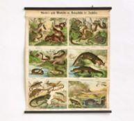 """Fünf """"Schreiber's große Wandtafeln der Naturgeschichte der Amphibien"""" & eine Landkarte Afrikas"""