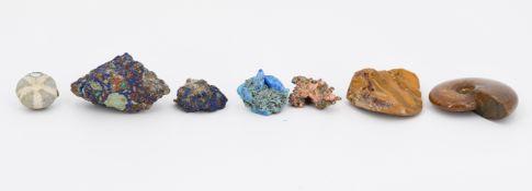 Gruppe von verschiedenen Mineralien und 3 Versteinerungen