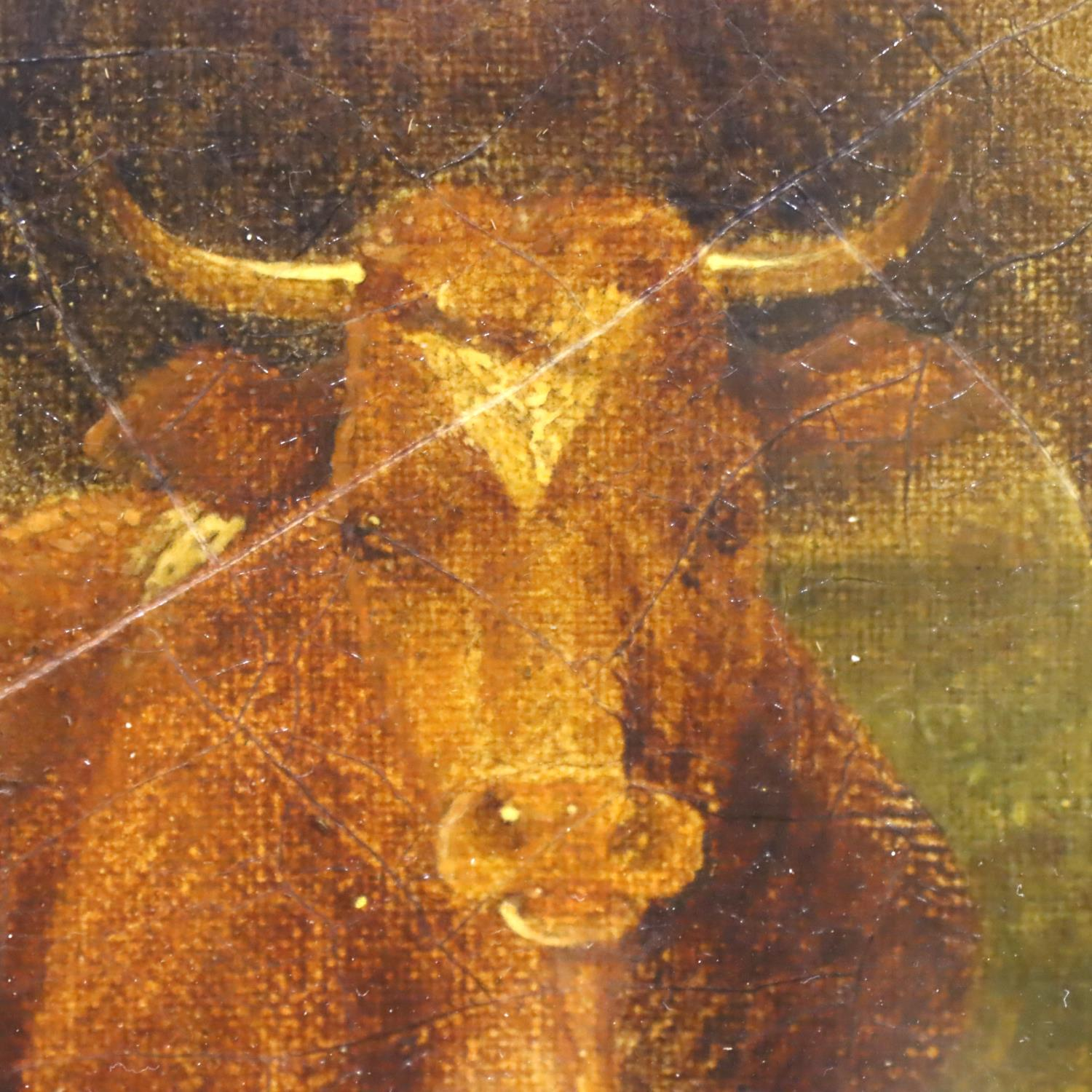 Thomas Sidney Cooper oil on canvas (b.1803 - d.1902), recumbent cattle signed to lower portion, T - Image 3 of 3