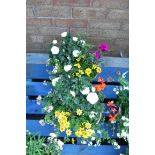 2 concrete planters of mixed plants incl. daisies and small roses