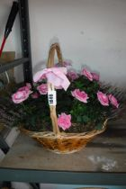 Wicker basket containing mixed plants