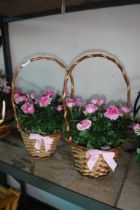 2 pre planted wicker baskets