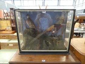 Cased Victorian taxidermy study of a partridge and a golden pheasant (Tommy & Allen)