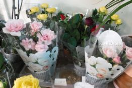 5 scented roses