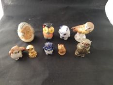 A collection of Small Owls