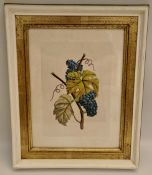 Art Hand Coloured Print Picture Grapes on Vine Framed