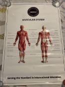 CIBTAC Medical Posters