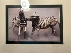 Burchell's Zebra Fighting, Etosha, Namibia, Limited Edition By Dr Hentie Burger