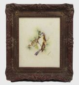 Framed Songbird Watercolour by Royal Worcester Artist Peplow