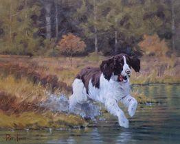 """""""Splash """"spaniel dog print by Scottish artist Peter Munro"""