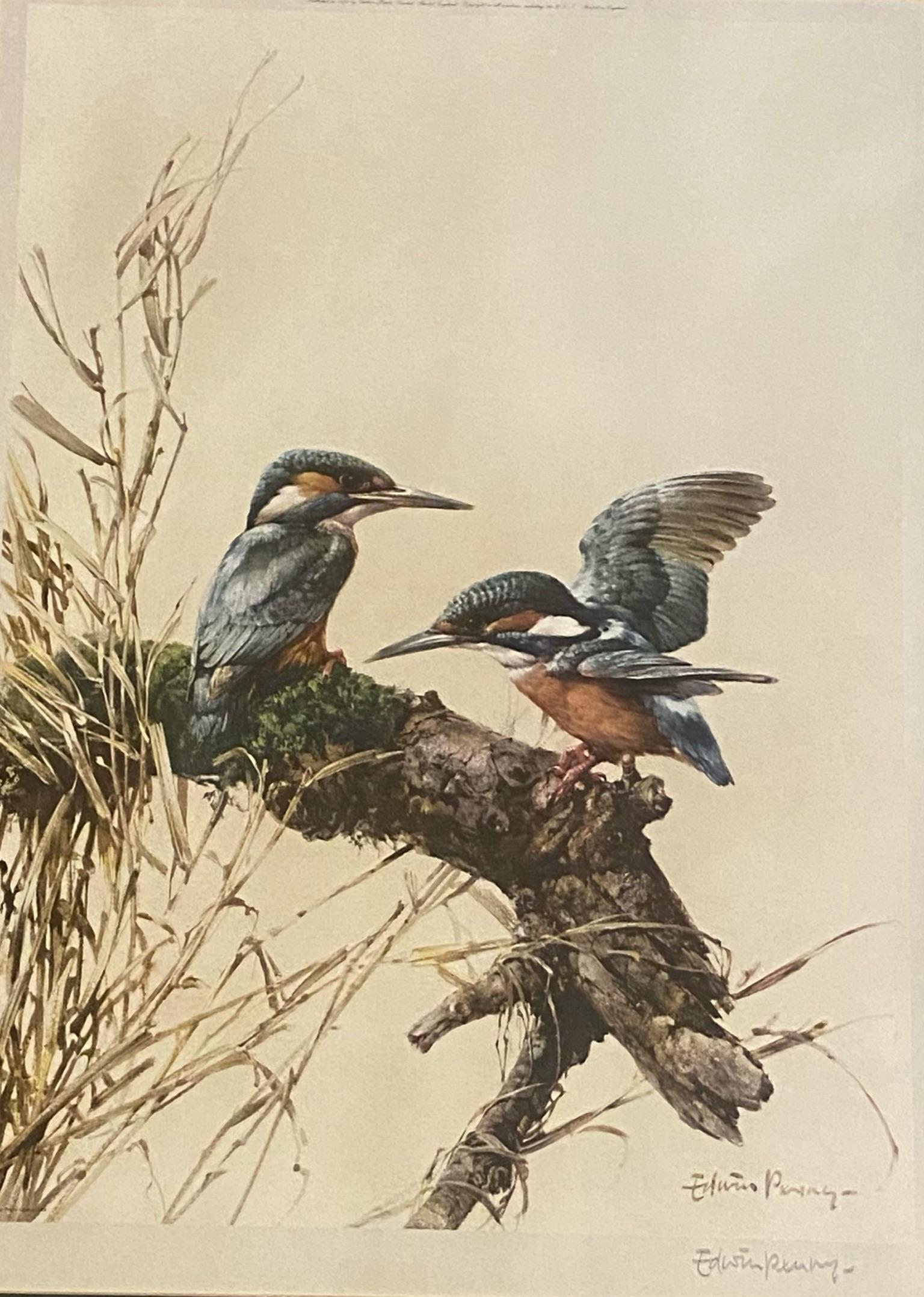 "Edwin Penny Large pencil signed print ""Kingfishers"""
