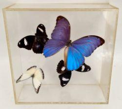 Vintage Set of Cased Butterflies