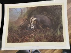 Badgers by C David Johnston Limited Edition Signed Print