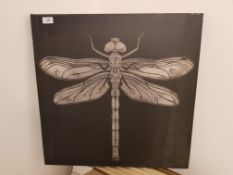 Dragonfly Print On Canvas 600 X 600mm