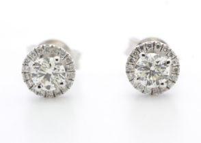 18k White Gold Halo Set Earrings 0.65 Carats