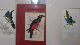 A group of three hand coloured prints from 'The Naturalist's Library', (15x9 cm). (3)