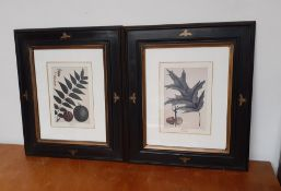 """A pair of prints, """"Black Walnut"""" and """"Red oak"""", framed and glazed (26x19 cm)."""