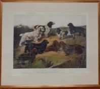 """A print after Arthur Wardle, """"Field Spaniels of the 20th Century"""", framed and glazed, (56x69 cm)."""