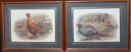 A pair of prints depicting pheasants (14x19 cm). (2)