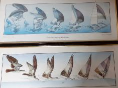 A pair of prints, framed and glazed, (25x64 cm). (2)