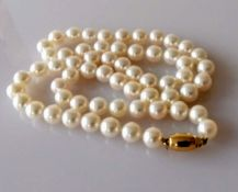 A single row of sixty Akoya cultured pearls measuring from 6.5mm to 7mm on a yellow gold barrel